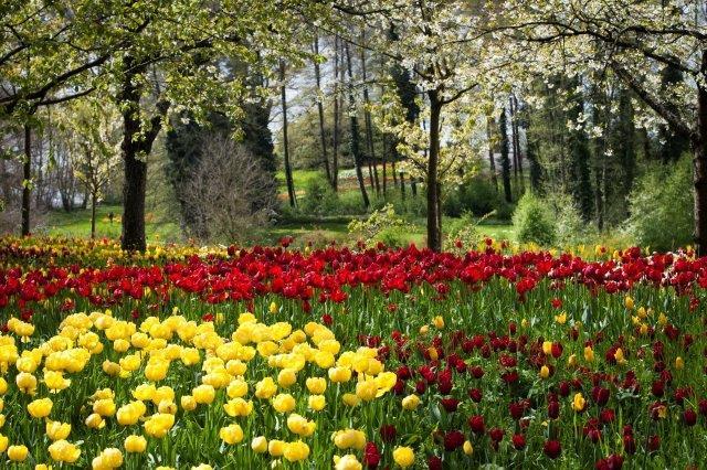 цветущий остров Майнау на Бодензее в апреле