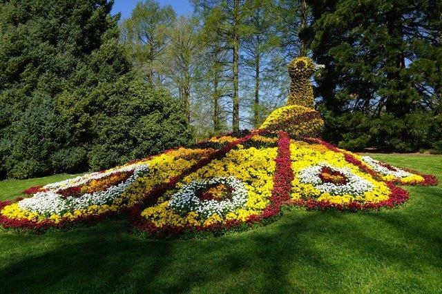 павлин из цветов на острове Майнау