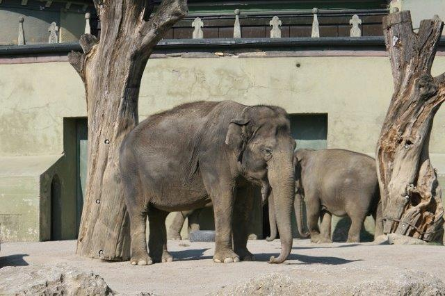 слоны в зоопарке Мюнхена
